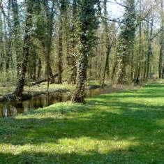 Wiesen und Bäume