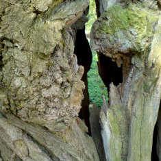 Baum mit Durchguck