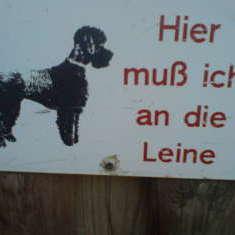 Hundeschilder 2011
