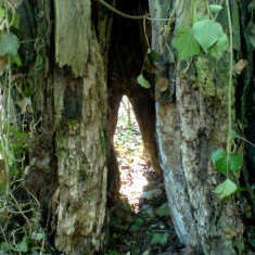 Noch ein Baum mit Durchblick