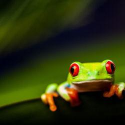 Frosch  © oleksajewicz | fotolia.de